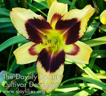 Daylily Adventure Time