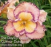 Daylily Daringly Different