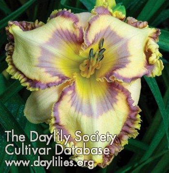 Daylily Easter Egg